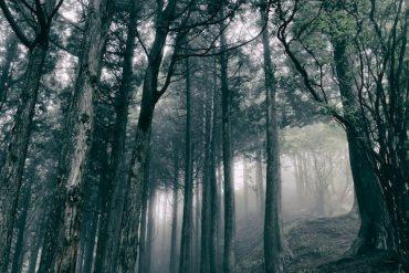 Akira Kosemura - In The Dark Woods