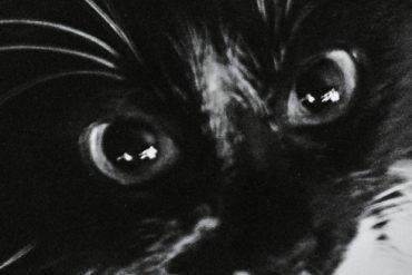 Klub des Loosers - Le chat et autres histoires